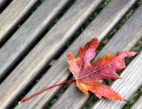 single leaf on an early autumn day
